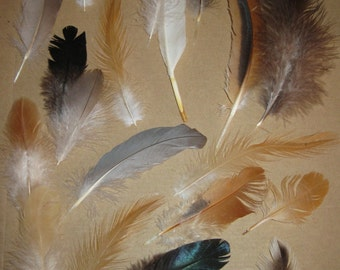 Natural Feather Lot for fun craft making ideas!
