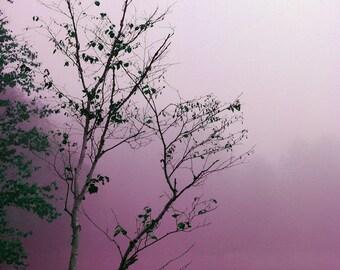 "Landscape photography dreamy dark mauve trees nature forest woodland minimal - ""Purple lake"" 8 x 10"