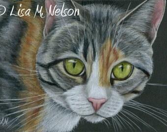 Mixed Tabby Cat on Black Original Colored Pencil Art