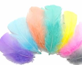 1/4 lb - PASTEL MIX Turkey T-Base Plumage Wholesale Feathers (bulk) : 4088