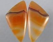 Gorgeous Piranha Agate Designer Cabochon SALE 20% OFF