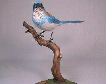 Western Scrub Jay Wooden Hand carved Bird