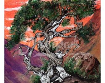 Cedar Tree - Art Print