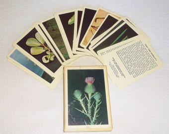 Vintage Edible and Poisonous Plants Cards • 54 cards • Western states