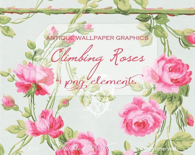 Cabbage Roses Climbing Garden Rose Large Antique Wallpaper PNG ClipArt Elements
