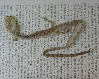 Cruelty Free No. B6 Alligator Lizard Skin Shed