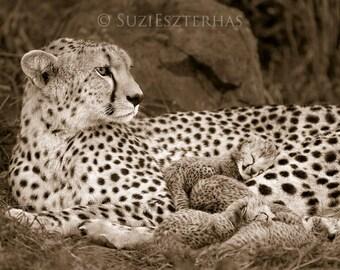 SNUGGLE BABY CHEETAH Photo, Vintage Sepia Print, African Wildlife Photography, Wall Decor, Safari Baby Nursery Art, Mom and Baby Animal, Cat