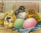 Clutch of Baby Chicks with Colored Easter Eggs – Embossed Vintage Easter Postcard 1910 Tuck & Sons