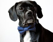Navy Blue Polka Dot Bow Tie Dog Collar