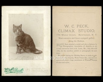 Antique 1890s Cabinet Card Photo of a Newburgh New York Cat