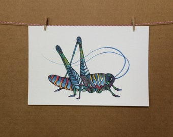Watercolor/Ink-Animal-Insects-Grasshopper-Mr. Lubber