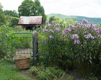 Nature Photography, Art, Photography, Garden Scene, Country Home Decor, Garden Flowers Print, Rustic Print, Fine Art Print