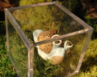 Pet Snail with Terrarium home