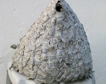 On Sale - Massive Paper Bald-Faced Hornet's Nest • Bee Hive • Unique Insect Work of Art