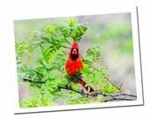 Cardinal Note Card, Bird Photo Art, Wildlife Blank Greeting Card