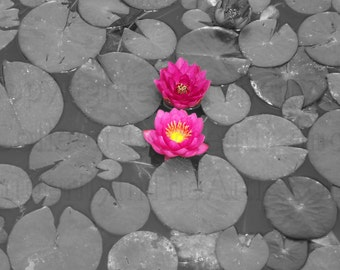 Deep Bright Dark Pink Water Lily Lotus on Black & White Lily Pads Nature Photography Wall Art Home Deco Lipstick Pink Neon Night