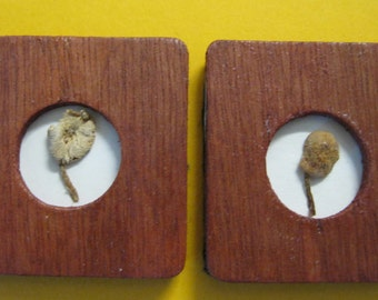 Doll House Miniature Wood Frame Mushroom Wall Hanging #18 Set Of Two