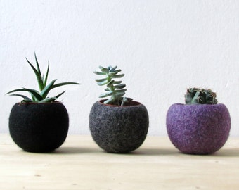 Felt succulent planter collection / black grey purple / Succulent terrarium / the dark side of the moon / home decor