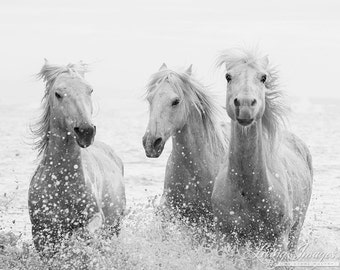 Three White Horses Splashing - Fine Art Horse Photograph - Horse - Camargue - Horse Photograph - Black and White