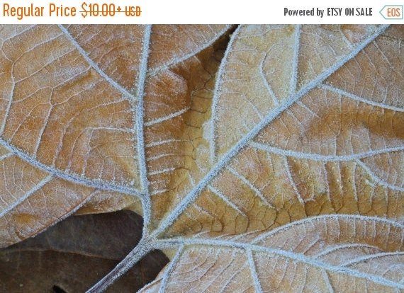 SALE 20% OFF Morning Frost on Leaf, Nature Photography, Cold, Beige, Tan, Autumn, Woodland, Winter, Fine Art Photograph, Earth Tone, Neutral