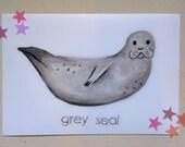Grey Seal illustration print (PETA)