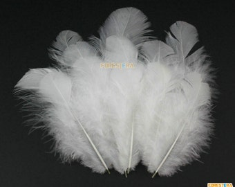 100 Pieces White  Feather 4-10cm (YM15)