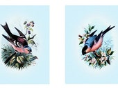 Set of 2 Beautiful Birds - 8 x 10 or 11 x 14 inch Fine Art Print