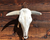 Vintage cow skull with horns Mexico home decor rustic hacienda ranch barn country home and living