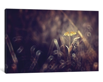 iCanvas Dark Violet Gallery Wrapped Canvas Art Print by Donald Jusa