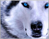 Pack of 4 Dog Puppy Siberian Husky dogs puppies Stationery Greeting Notecards/ Envelopes Set
