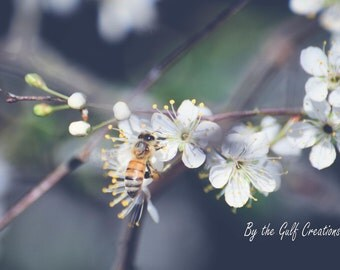 Honey Bee, Flowers, Chokeberry Blossoms, Nature Photography, Fine Art Photography, 8X10, Matted, Glossy, Floral Photography