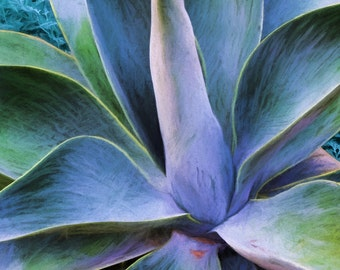Large Botanical Art, Succulent Leaves, Century Plant, Blue Leaves, Blue Green Purple, Modern Decor, Large Wall Art, Ready to Hang Canvas