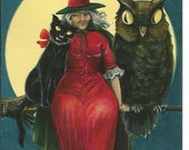 Antique Halloween Postcard Black Cat Witch Owl