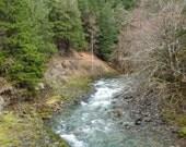 Along Brice Creek Trail, DIGITAL DOWNLOAD, In OR, creek decor, hiking trail , umpqua  forest decor wooded trail, fine art photography
