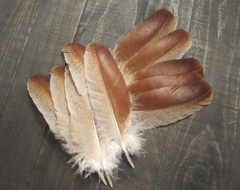 12 Rare Regal Red Turkey Wing Covert Feathers ~ Cruelty Free