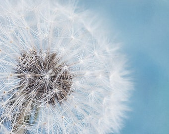"Flower Photography, Pale Blue and White Dandelion Print, Pastel Blue, Aqua, Flower Wall Decor, Shabby Chic, Nursery Wall Art  ""Daydream"""