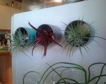 Air Plant Fridge Magnets