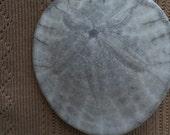 Sea Urchin Leather Necklace, Fossil Shell Pendant Necklace, Shell Leather Necklace, K Brown Jewellery, Edinburgh Jewellery Designer, U.K.