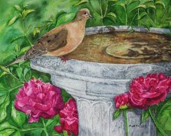 Mourning Dove, bird print
