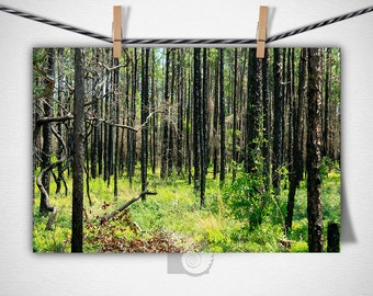 Forest Photography, Tree photos, nature photos, art prints, nature wall art, Botanical Photography, Woods, Nature, Plants, nature lovers