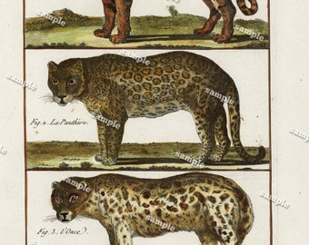 1780 Original Antique Natural History copperplate of Animals Histoire Naturelle Lions and tigers Decorative art wall art home decore Buffon