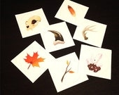 Nature Sticker Collection Set
