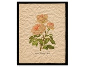 Grace Darling Rose - Flower Artwork - Floral Art Print - 8x10 Print  - Vintage Cottage Style Decor