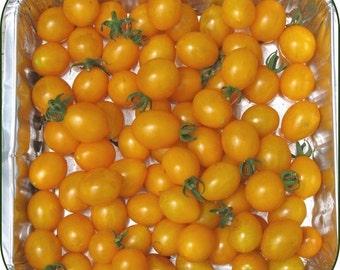 Tomato Plant, Cherry, Blondkopfchen
