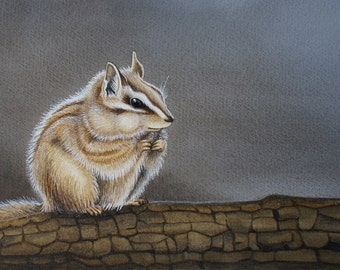 Western Chipmunk - original watercolor painting