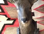 Wood Carved Deer Stag Head