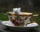 """Tiny Taxidermy Mouse in a Vintage """"Golden Rose"""" Teacup, Studio Sisu Original, Housewarming Gift, Birthday, Valentines Day, Taxidermy Mouse"""
