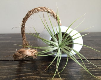 Light Blue Ceramic Wheel Thrown Air Plant Holder