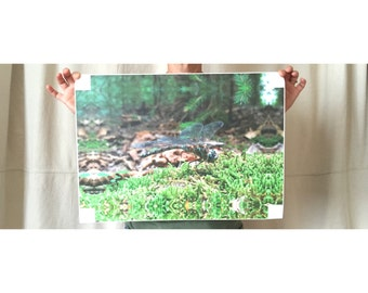 """Dragonfly Canvas Print Non-Framed(Wall Decor)[5x8""""-12x18""""]Free Shipping in US"""