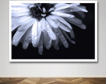 Photograph - Raindrop Rain Drop Daisy in Black and White in Macro Fine Art Photography Print Wall Art Home Decor